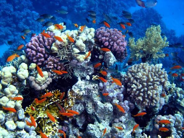 Искусственный коралловый риф в Дубае  (2)