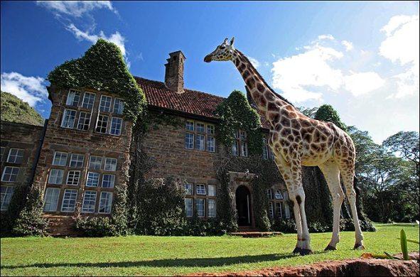 The Giraffe Manor  (1)